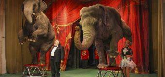 На театральных подмостках – звери.