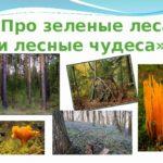 Про зелёные леса и лесные чудеса