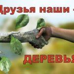 Друзья наши – деревья